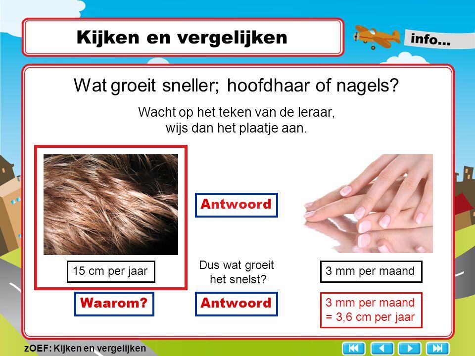 zOEF: Kijken en vergelijken Kijken en vergelijken 15 cm per jaar3 mm per maand Dus wat groeit het snelst? Wat groeit sneller; hoofdhaar of nagels? Wac