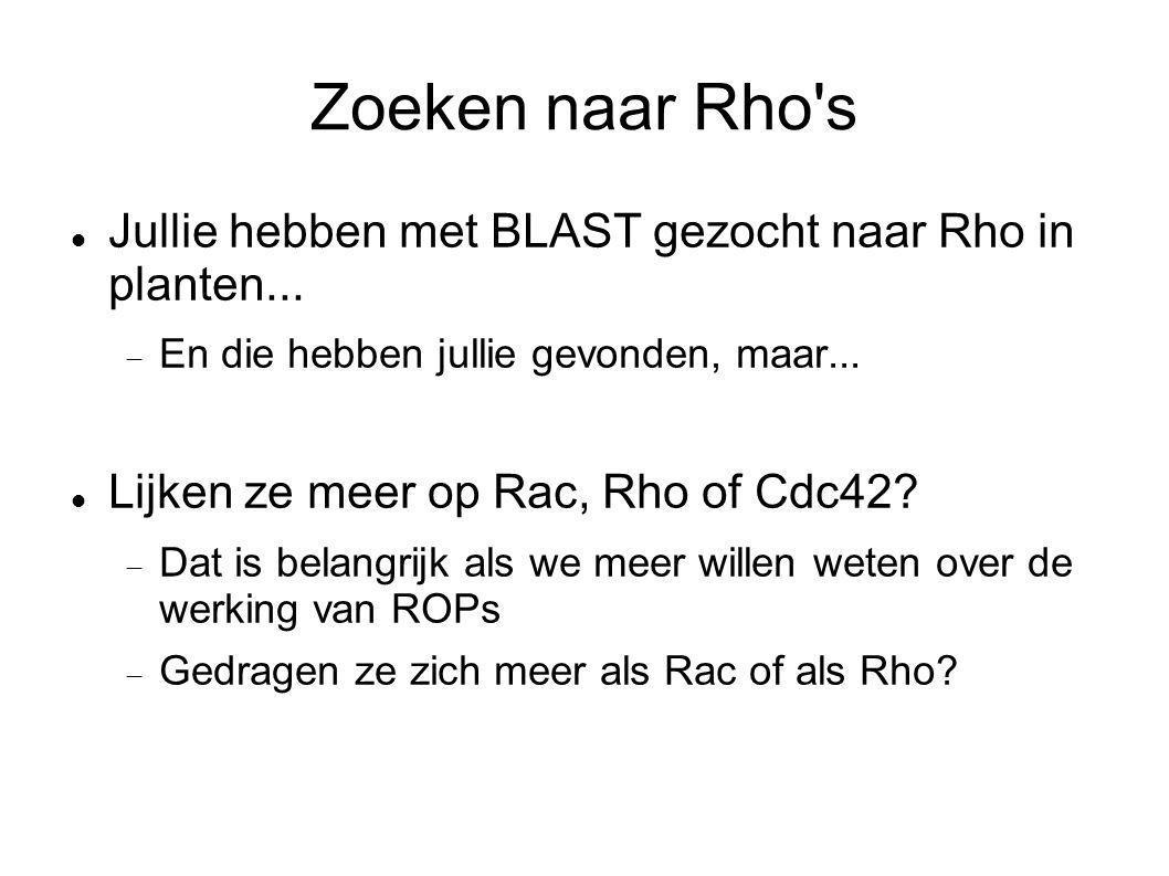Zoeken naar Rho's Jullie hebben met BLAST gezocht naar Rho in planten...  En die hebben jullie gevonden, maar... Lijken ze meer op Rac, Rho of Cdc42?