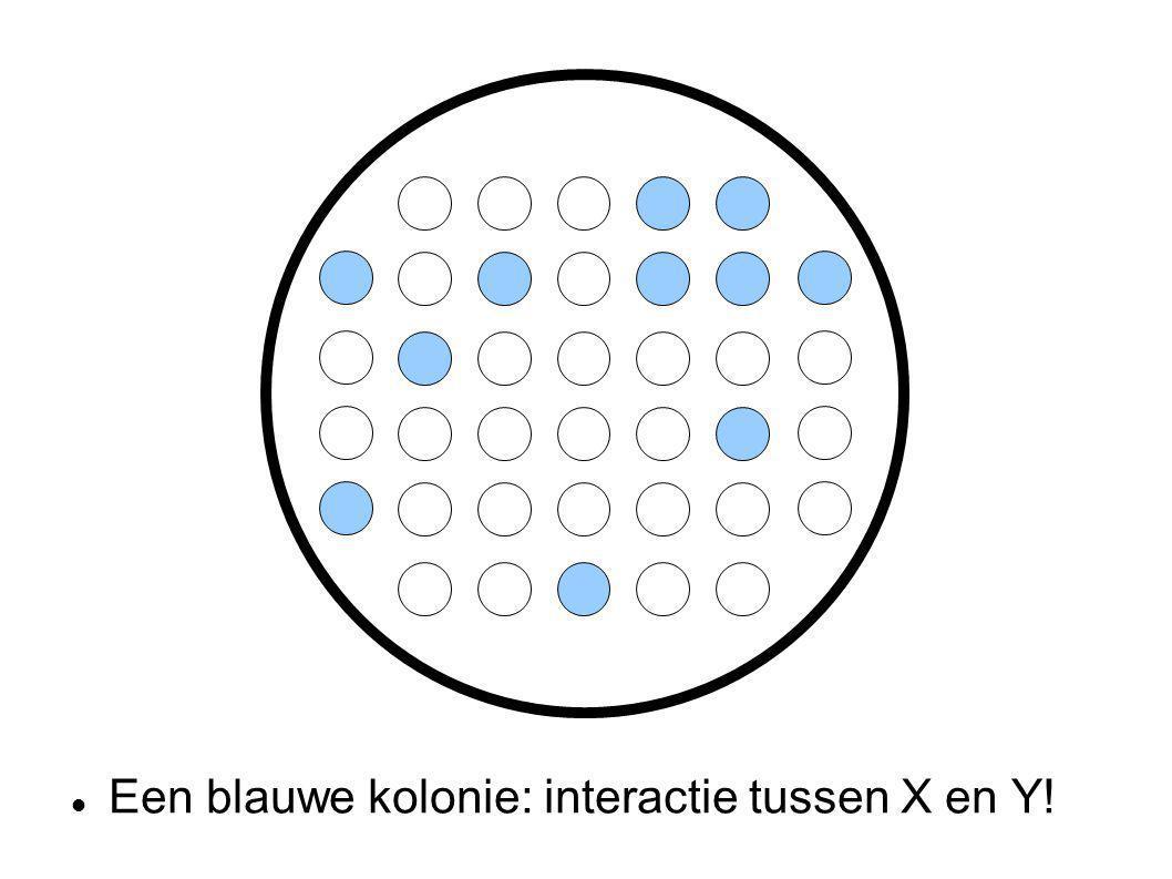 Een blauwe kolonie: interactie tussen X en Y!