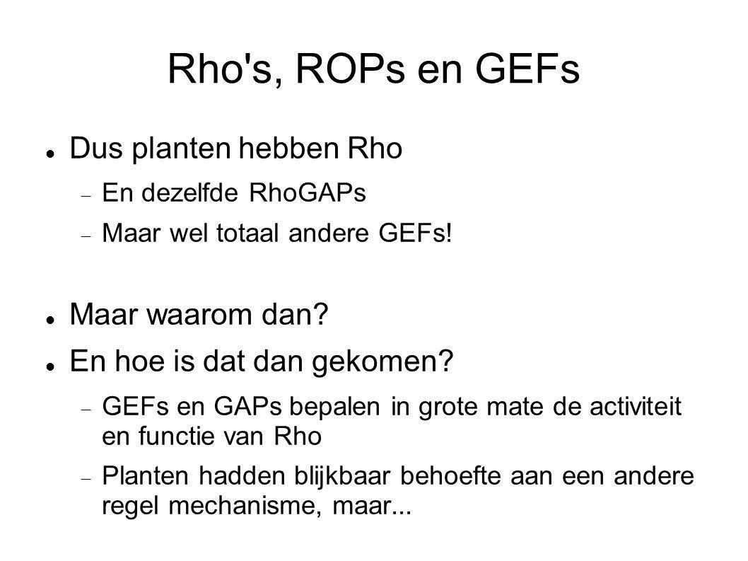 Rho's, ROPs en GEFs Dus planten hebben Rho  En dezelfde RhoGAPs  Maar wel totaal andere GEFs! Maar waarom dan? En hoe is dat dan gekomen?  GEFs en