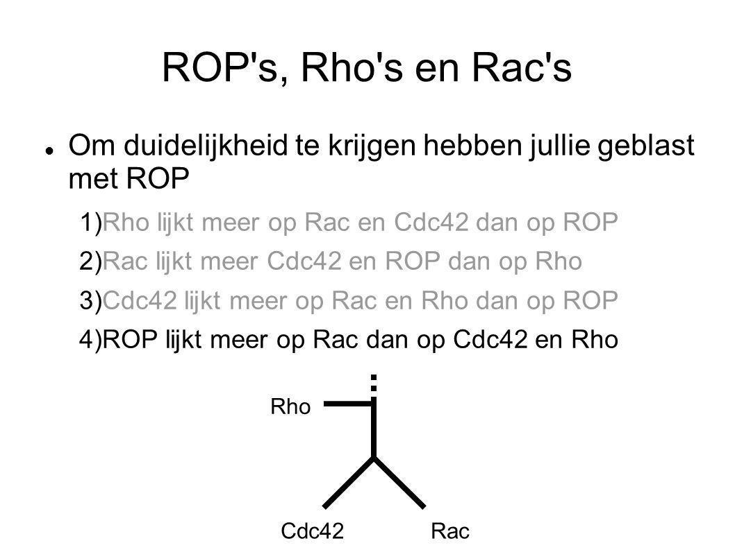 ROP's, Rho's en Rac's Om duidelijkheid te krijgen hebben jullie geblast met ROP 1)Rho lijkt meer op Rac en Cdc42 dan op ROP 2)Rac lijkt meer Cdc42 en
