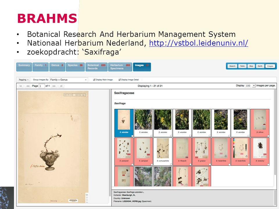 BRAHMS Botanical Research And Herbarium Management System Nationaal Herbarium Nederland, http://vstbol.leidenuniv.nl/http://vstbol.leidenuniv.nl/ zoekopdracht: 'Saxifraga'