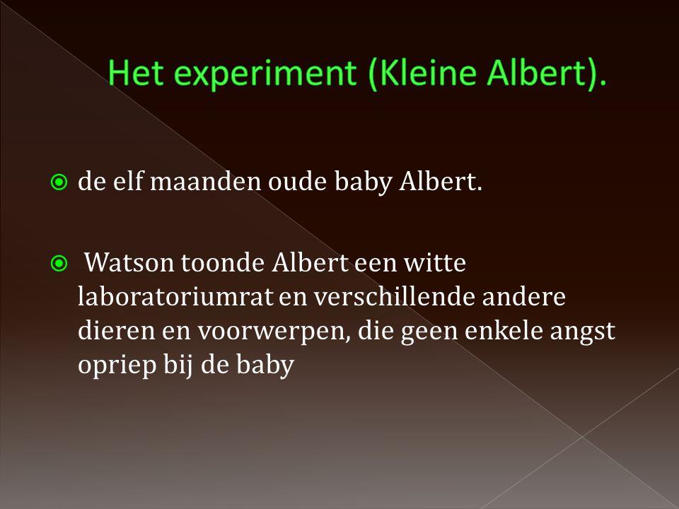  de elf maanden oude baby Albert.