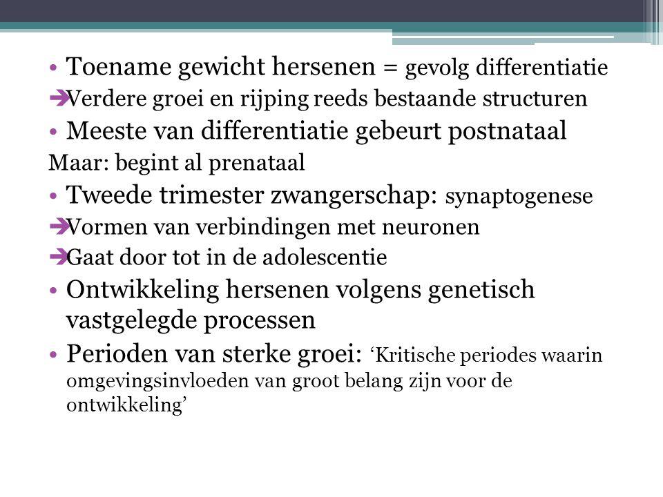Toename gewicht hersenen = gevolg differentiatie  Verdere groei en rijping reeds bestaande structuren Meeste van differentiatie gebeurt postnataal Ma
