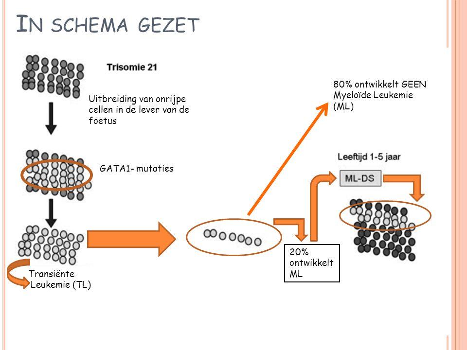 I N SCHEMA GEZET Uitbreiding van onrijpe cellen in de lever van de foetus GATA1- mutaties Transiënte Leukemie (TL) 80% ontwikkelt GEEN Myeloïde Leukem