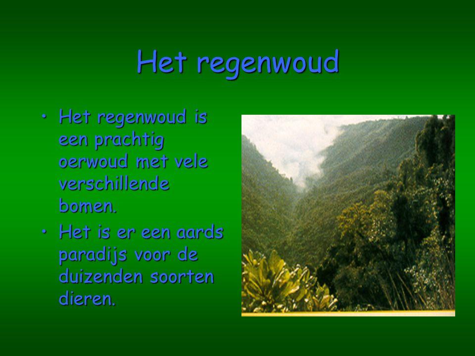 Het regenwoud Het regenwoud is een prachtig oerwoud met vele verschillende bomen.Het regenwoud is een prachtig oerwoud met vele verschillende bomen.