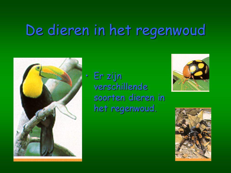 De dieren in het regenwoud Er zijn verschillende soorten dieren in het regenwoud.Er zijn verschillende soorten dieren in het regenwoud.