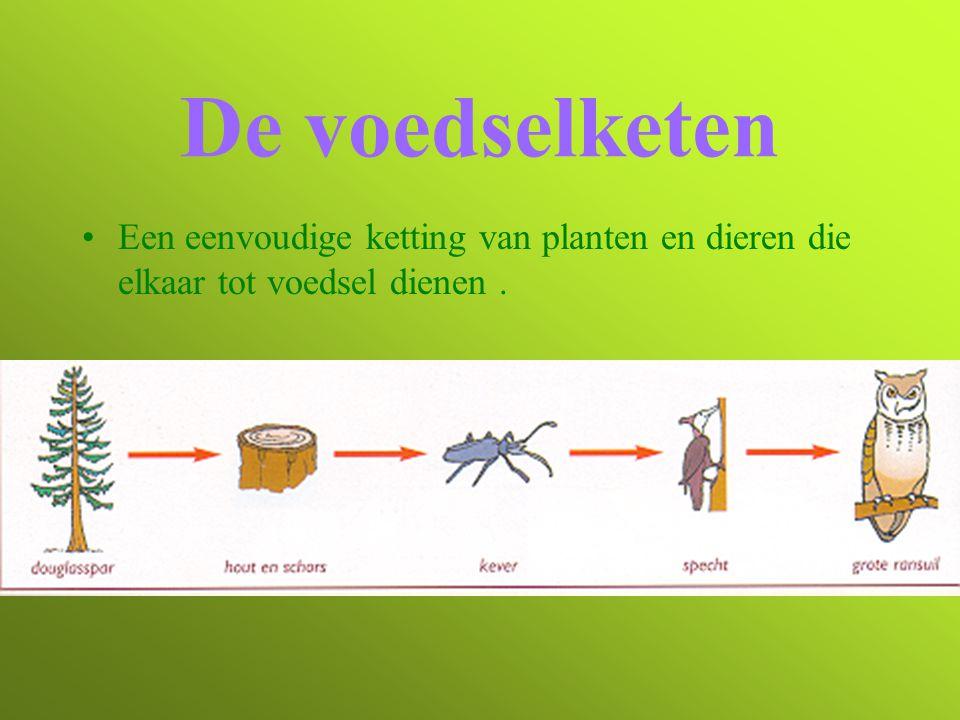 De voedselketen Een eenvoudige ketting van planten en dieren die elkaar tot voedsel dienen.