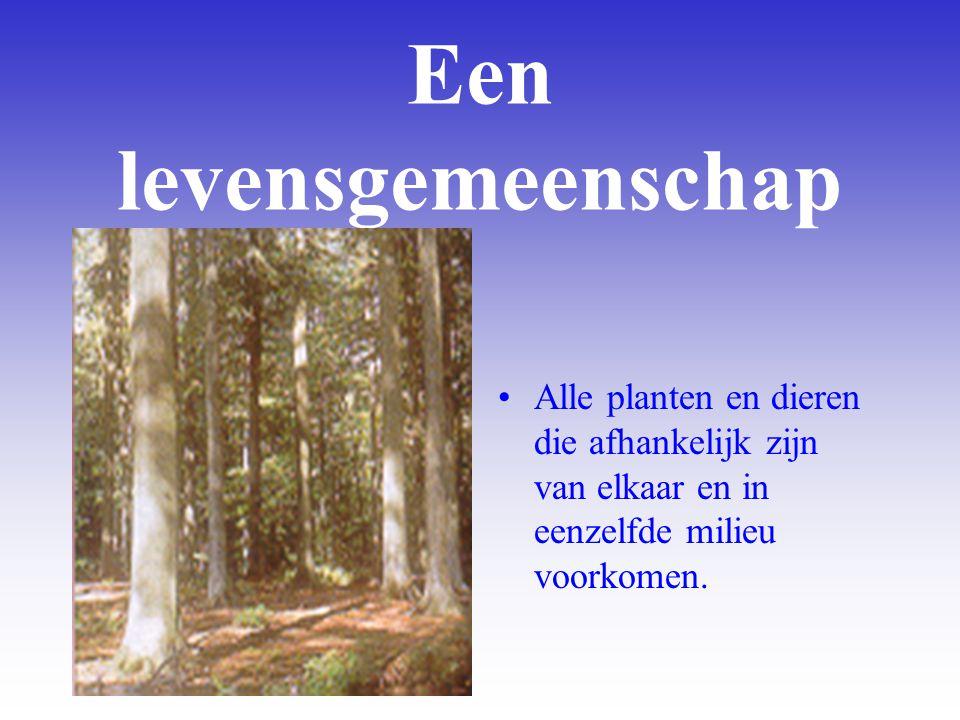 Een levensgemeenschap Alle planten en dieren die afhankelijk zijn van elkaar en in eenzelfde milieu voorkomen.