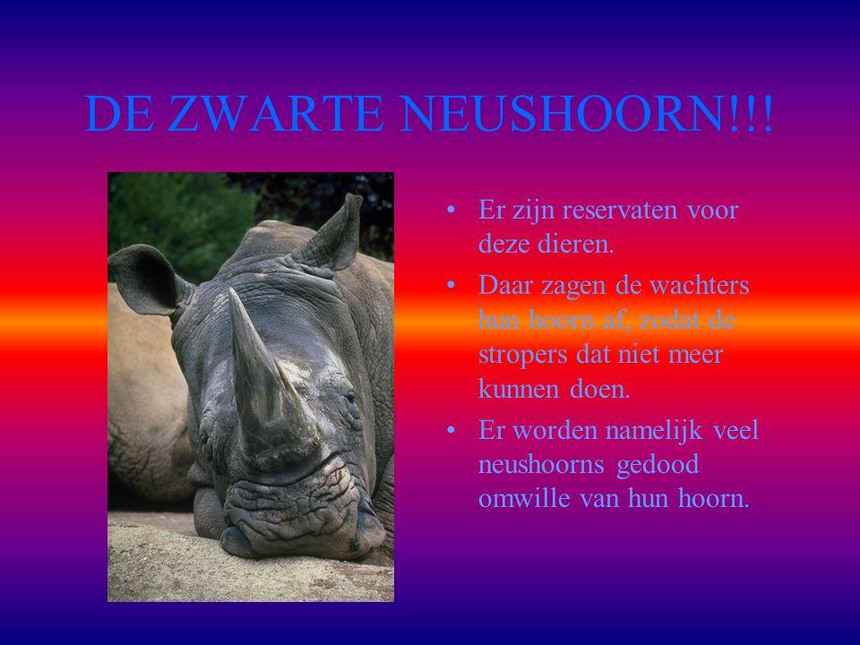 DE ZWARTE NEUSHOORN!!.Er zijn reservaten voor deze dieren.