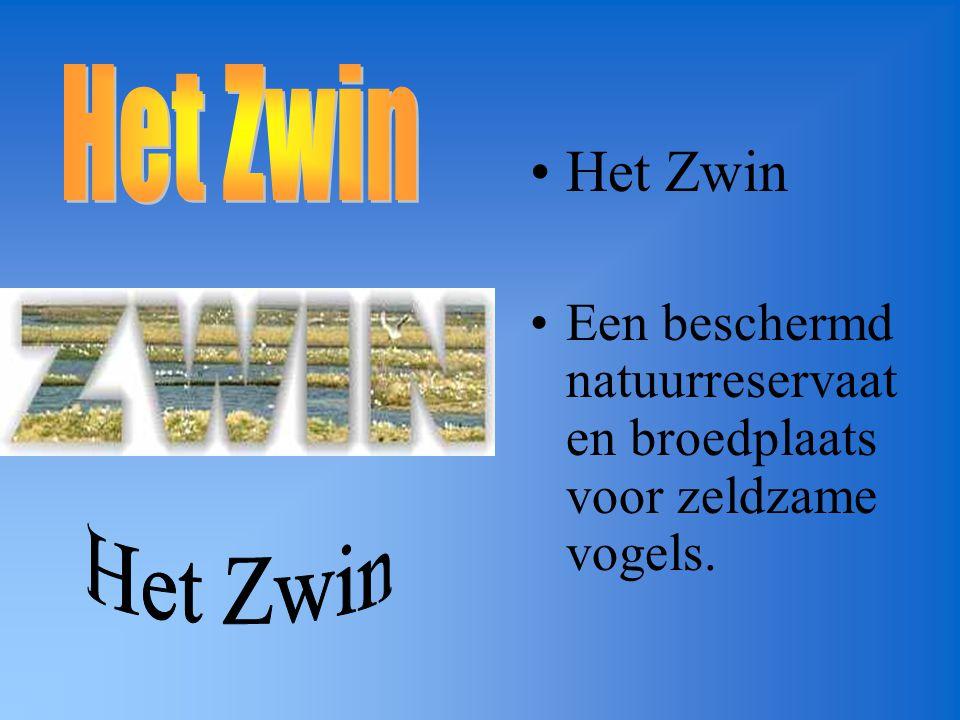 Het Zwin Een beschermd natuurreservaat en broedplaats voor zeldzame vogels.