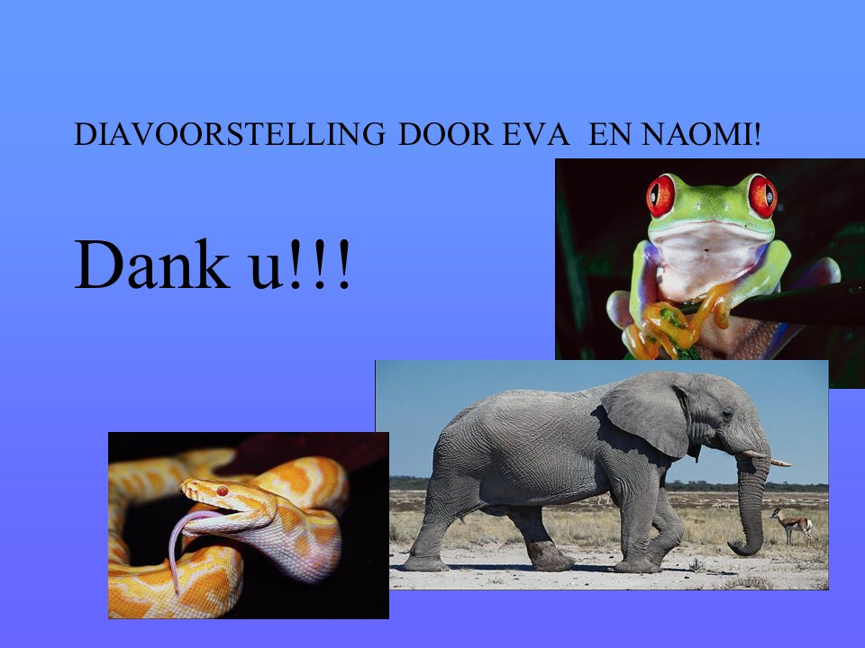 DIAVOORSTELLING DOOR EVA EN NAOMI! Dank u!!!