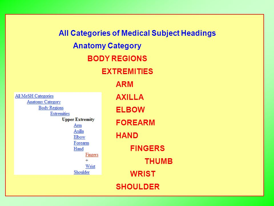 All Categories of Medical Subject Headings Anatomy Category BODY REGIONS EXTREMITIES ARM AXILLA ELBOW FOREARM HAND FINGERS THUMB WRIST SHOULDER