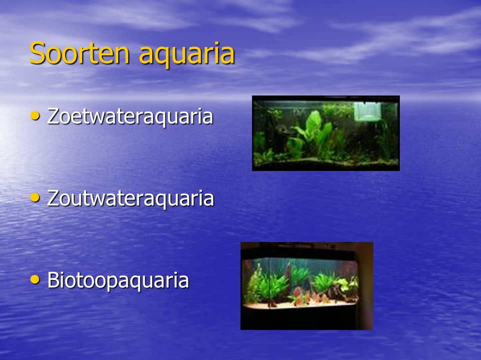 Soorten aquaria Zoetwateraquaria Zoetwateraquaria Zoutwateraquaria Zoutwateraquaria Biotoopaquaria Biotoopaquaria