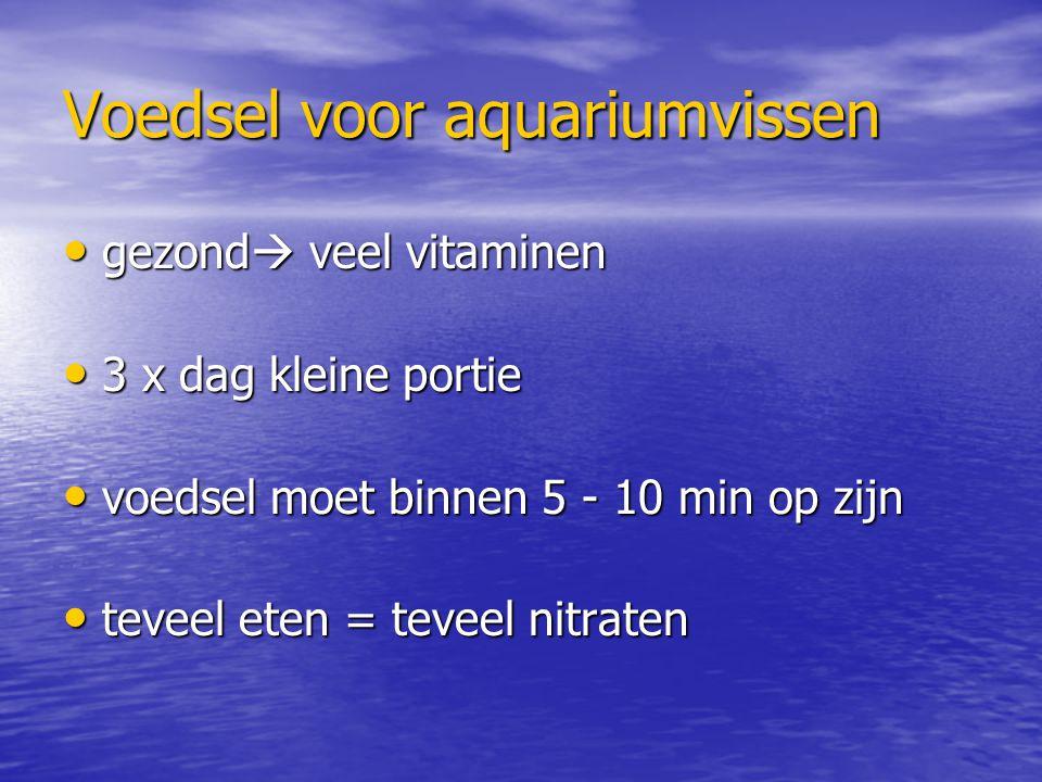 Voedsel voor aquariumvissen gezond  veel vitaminen gezond  veel vitaminen 3 x dag kleine portie 3 x dag kleine portie voedsel moet binnen 5 - 10 min