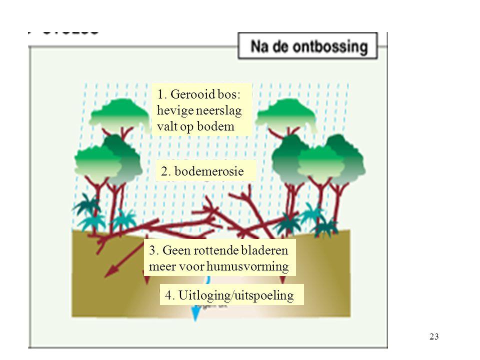 22 1. Hevige neerslag wordt opgevangen door kroonlaag 2. De bodem wordt beschermd voor hevige neerslag 3. Rottende bladeren vormen humus 4. Wortels ve