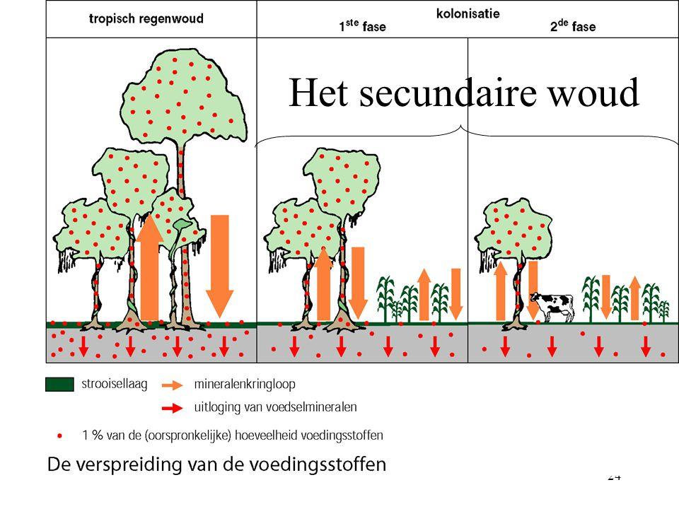 23 1. Gerooid bos: hevige neerslag valt op bodem 2. bodemerosie 3. Geen rottende bladeren meer voor humusvorming 4. Uitloging/uitspoeling