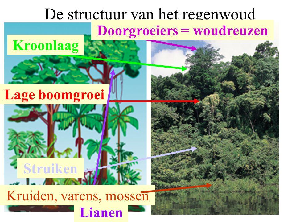 7 ManausUkkel gemiddelde jaartemperatuur Temperatuurschommelingen gemiddelde jaarneerslag 9,5° C 18° C 872 mm 26,6°C 1,3 °C 2098 mm Klimatogram Manaus