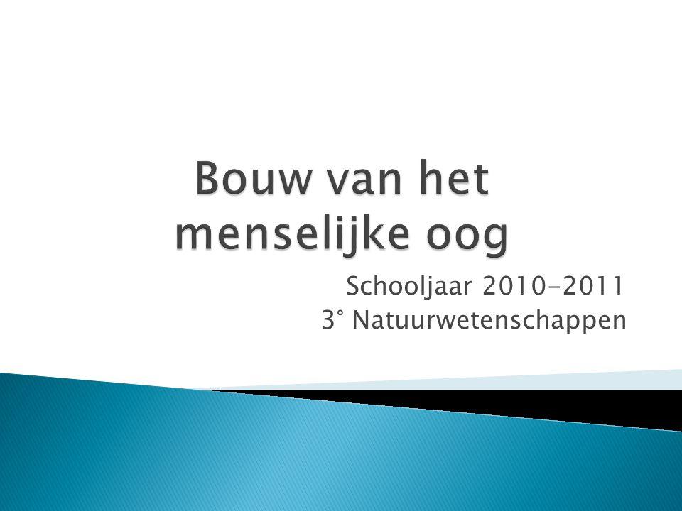 Schooljaar 2010-2011 3° Natuurwetenschappen