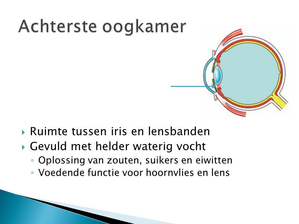  Ruimte tussen iris en lensbanden  Gevuld met helder waterig vocht ◦ Oplossing van zouten, suikers en eiwitten ◦ Voedende functie voor hoornvlies en