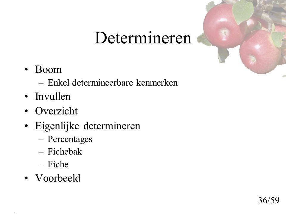 Determineren Boom –Enkel determineerbare kenmerken Invullen Overzicht Eigenlijke determineren –Percentages –Fichebak –Fiche Voorbeeld 36/59