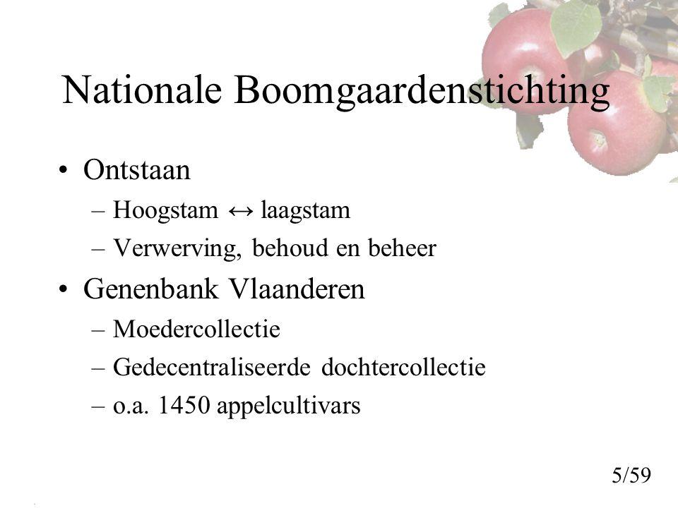 Nationale Boomgaardenstichting Ontstaan –Hoogstam ↔ laagstam –Verwerving, behoud en beheer Genenbank Vlaanderen –Moedercollectie –Gedecentraliseerde dochtercollectie –o.a.