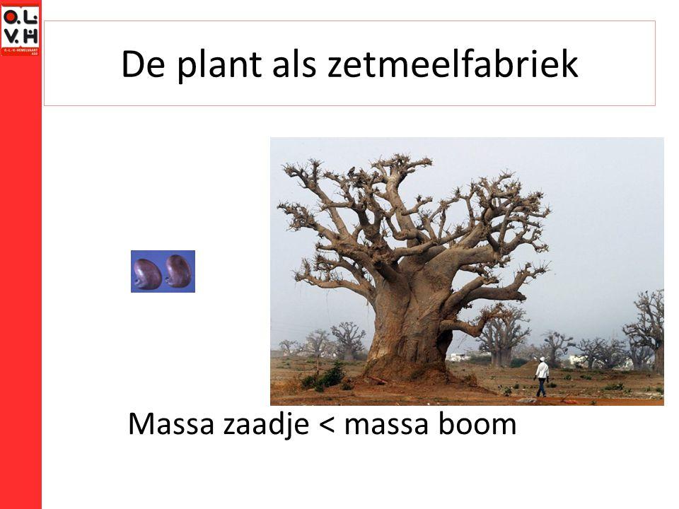 De plant als zetmeelfabriek Wat heeft een plant nodig om te groeien.