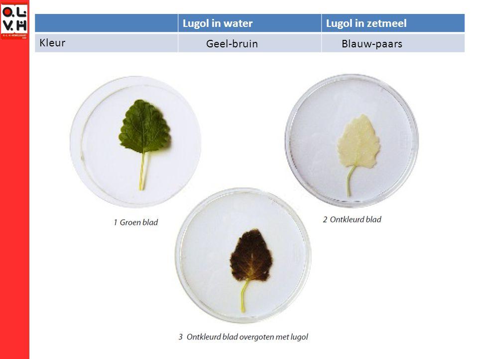 Lugol in waterLugol in zetmeel Kleur Geel-bruinBlauw-paars