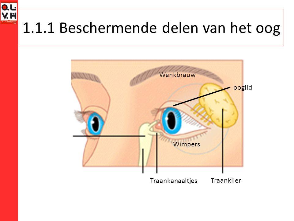 1.1.1 Beschermende delen van het oog Traanklier Traankanaaltjes Wimpers ooglid Wenkbrauw