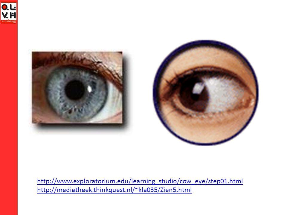 Experiment Met 2 ogen kijken  dieptezicht We kijken lichtjes vanuit een andere invalshoek Beide beelden overlappen  afstanden schatten