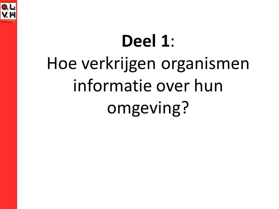 Lidslagreflex Houdt het hoornvlies vochtig d.m.v.