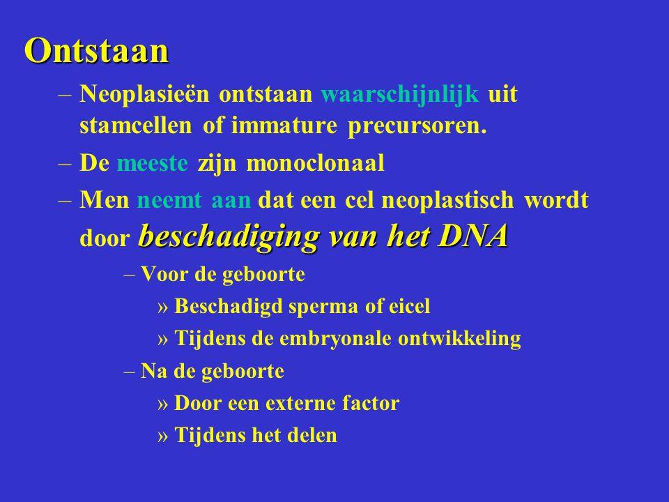 Ontstaan –Neoplasieën ontstaan waarschijnlijk uit stamcellen of immature precursoren. –De meeste zijn monoclonaal beschadiging van het DNA –Men neemt