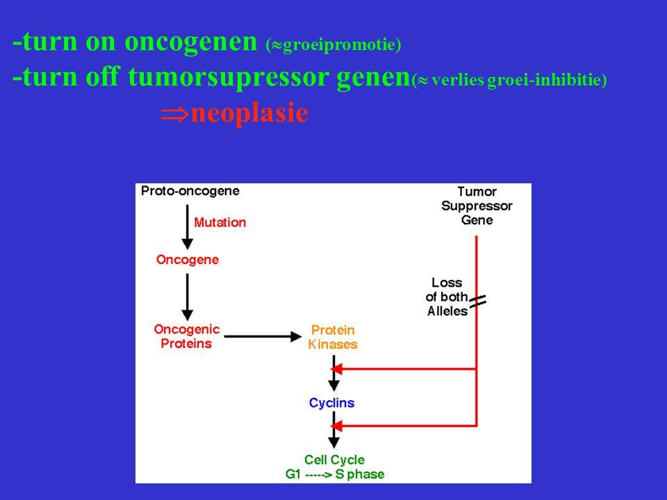 -turn on oncogenen (  groeipromotie) -turn off tumorsupressor genen (  verlies groei-inhibitie)  neoplasie