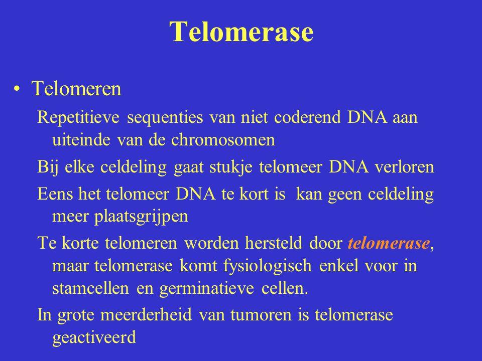 Telomerase Telomeren Repetitieve sequenties van niet coderend DNA aan uiteinde van de chromosomen Bij elke celdeling gaat stukje telomeer DNA verloren