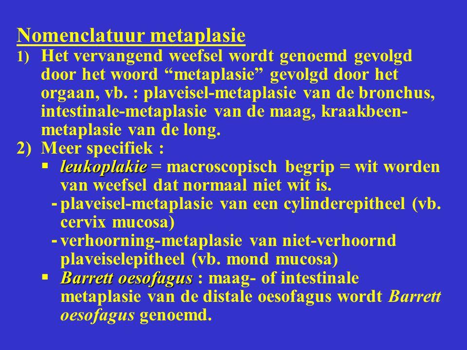 """Nomenclatuur metaplasie 1) Het vervangend weefsel wordt genoemd gevolgd door het woord """"metaplasie"""" gevolgd door het orgaan, vb. : plaveisel-metaplasi"""