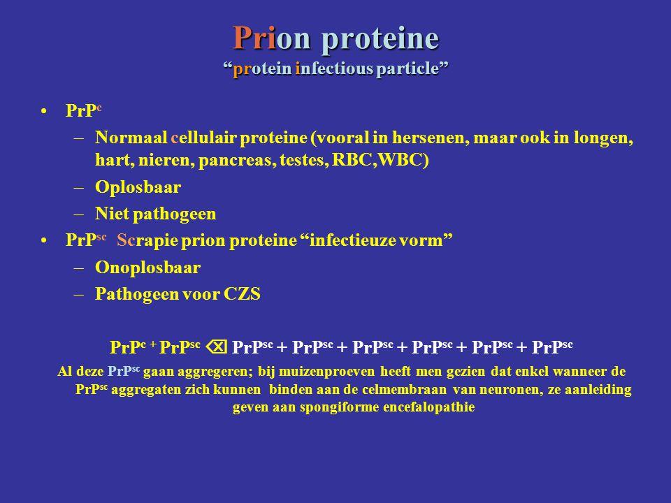 Prion proteine protein infectious particle PrP c –Normaal cellulair proteine (vooral in hersenen, maar ook in longen, hart, nieren, pancreas, testes, RBC,WBC) –Oplosbaar –Niet pathogeen PrP sc Scrapie prion proteine infectieuze vorm –Onoplosbaar –Pathogeen voor CZS PrP c + PrP sc  PrP sc + PrP sc + PrP sc + PrP sc + PrP sc + PrP sc Al deze PrP sc gaan aggregeren; bij muizenproeven heeft men gezien dat enkel wanneer de PrP sc aggregaten zich kunnen binden aan de celmembraan van neuronen, ze aanleiding geven aan spongiforme encefalopathie
