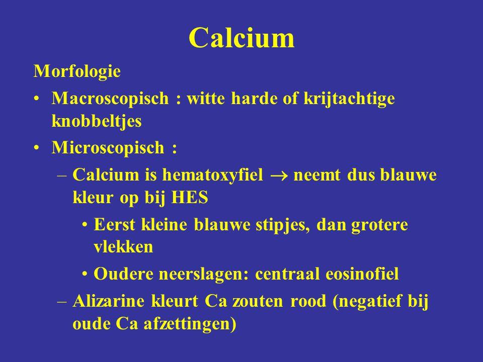 Morfologie Macroscopisch : witte harde of krijtachtige knobbeltjes Microscopisch : –Calcium is hematoxyfiel  neemt dus blauwe kleur op bij HES Eerst kleine blauwe stipjes, dan grotere vlekken Oudere neerslagen: centraal eosinofiel –Alizarine kleurt Ca zouten rood (negatief bij oude Ca afzettingen) Calcium