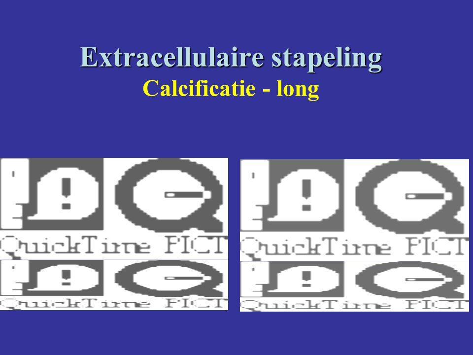 Extracellulaire stapeling Extracellulaire stapeling Calcificatie - long