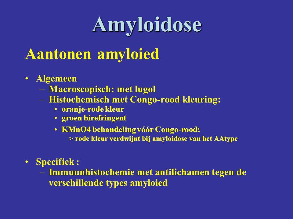 Amyloidose Aantonen amyloied Algemeen –Macroscopisch: met lugol –Histochemisch met Congo-rood kleuring: oranje-rode kleur groen birefringent KMnO4 behandeling vóór Congo-rood: > rode kleur verdwijnt bij amyloidose van het AAtype Specifiek : –Immuunhistochemie met antilichamen tegen de verschillende types amyloied