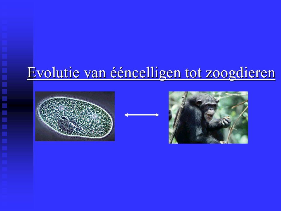 Evolutie van ééncelligen tot zoogdieren