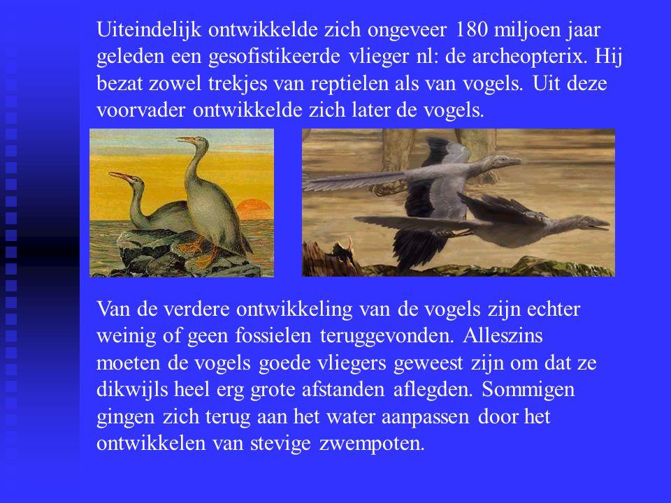 Uiteindelijk ontwikkelde zich ongeveer 180 miljoen jaar geleden een gesofistikeerde vlieger nl: de archeopterix. Hij bezat zowel trekjes van reptielen