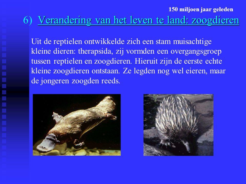 Verandering van het leven te land: zoogdieren 6) Verandering van het leven te land: zoogdieren Uit de reptielen ontwikkelde zich een stam muisachtige