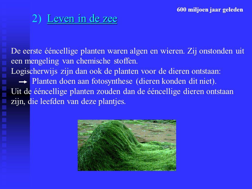 Leven in de zee 2) Leven in de zee De eerste ééncellige planten waren algen en wieren. Zij onstonden uit een mengeling van chemische stoffen. Logische