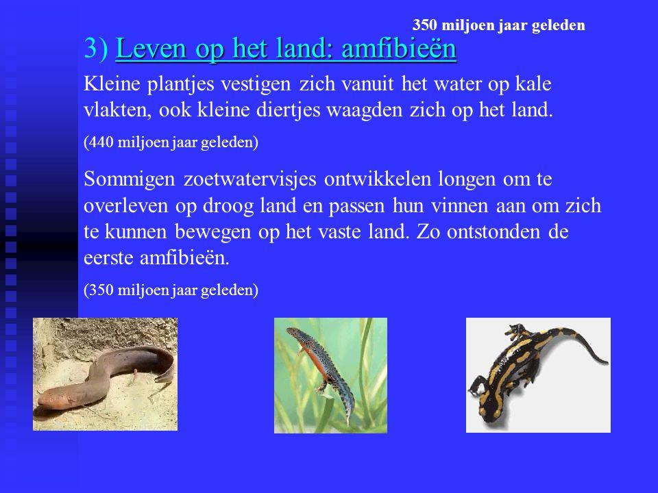Leven op het land: amfibieën 3) Leven op het land: amfibieën Kleine plantjes vestigen zich vanuit het water op kale vlakten, ook kleine diertjes waagden zich op het land.
