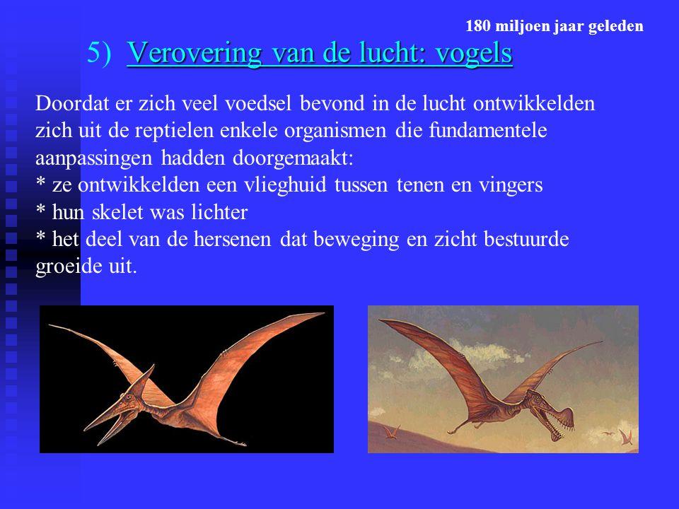 Verovering van de lucht: vogels 5) Verovering van de lucht: vogels Doordat er zich veel voedsel bevond in de lucht ontwikkelden zich uit de reptielen