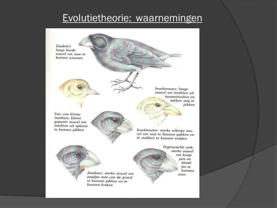 Evolutietheorie: waarnemingen
