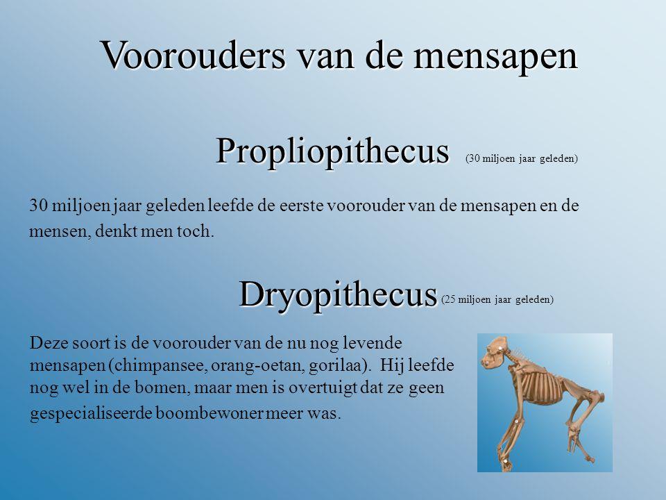 Propliopithecus (30 miljoen jaar geleden) 30 miljoen jaar geleden leefde de eerste voorouder van de mensapen en de mensen, denkt men toch.