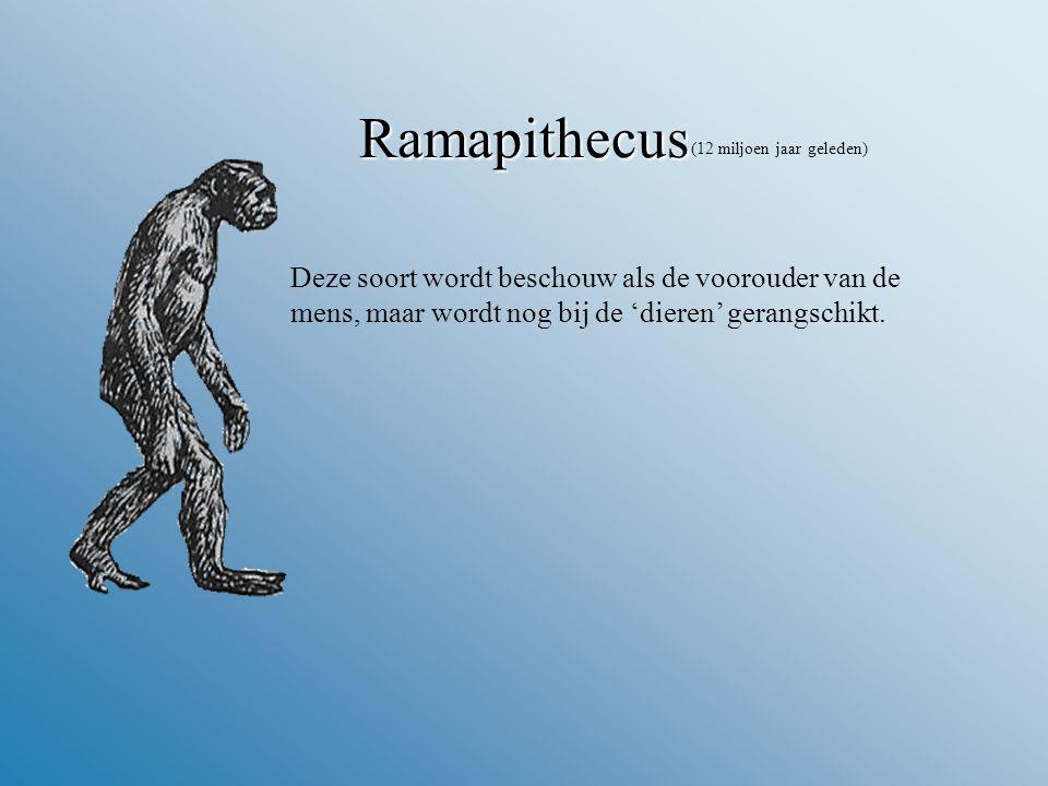 Ramapithecus Deze soort wordt beschouw als de voorouder van de mens, maar wordt nog bij de 'dieren' gerangschikt.