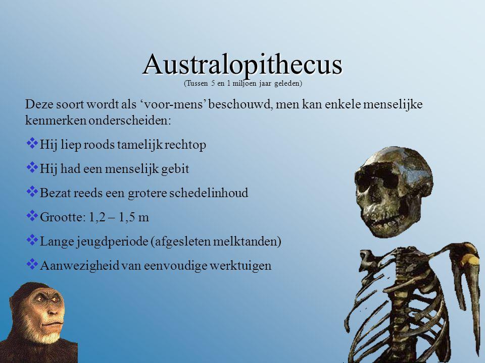 Australopithecus (Tussen 5 en 1 miljoen jaar geleden) Deze soort wordt als 'voor-mens' beschouwd, men kan enkele menselijke kenmerken onderscheiden:  Hij liep roods tamelijk rechtop  Hij had een menselijk gebit  Bezat reeds een grotere schedelinhoud  Grootte: 1,2 – 1,5 m  Lange jeugdperiode (afgesleten melktanden)  Aanwezigheid van eenvoudige werktuigen