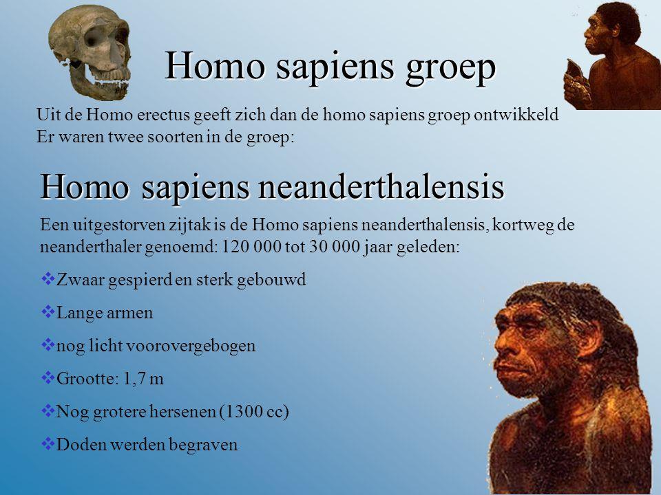 Homosapiensgroep Homo sapiens groep Uit de Homo erectus geeft zich dan de homo sapiens groep ontwikkeld Er waren twee soorten in de groep: Homo sapiens neanderthalensis Een uitgestorven zijtak is de Homo sapiens neanderthalensis, kortweg de neanderthaler genoemd: 120 000 tot 30 000 jaar geleden:  Zwaar gespierd en sterk gebouwd  Lange armen  nog licht voorovergebogen  Grootte: 1,7 m  Nog grotere hersenen (1300 cc)  Doden werden begraven